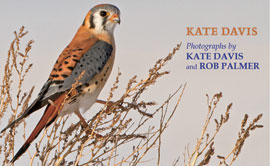 Book Cover: American Kestrel: Pint-Sized Predator