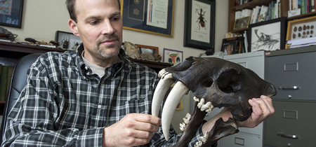 UM Professor Doug Emlen displays a replica skull of a saber-toothed cat