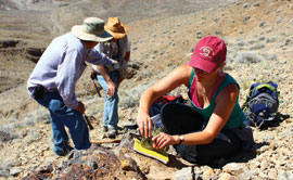 A University of Montana field team measures rocks at New York Canyon, Nevada.
